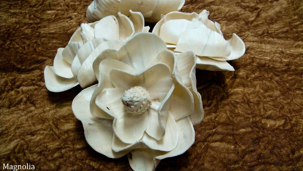 Sola Bloom